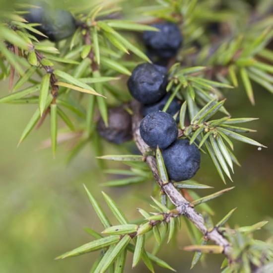 Juniperberry Organic 5ml
