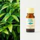 Cinnamon Leaf 10ml