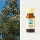 Eucalyptus Smithii organic 10ml