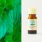 Peppermint organic 10ml